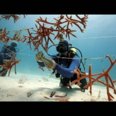 """Coral reefs and climate change: can anything be done?"" Joanie Kleypas"